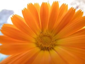 flower-261002